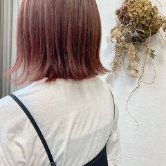 ボブ チェリーピンク チェリー エレガント ヘアスタイルや髪型の写真・画像