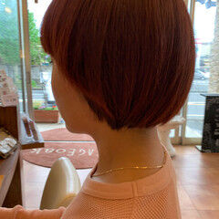 ショート 赤髪 ガーリー 赤茶 ヘアスタイルや髪型の写真・画像