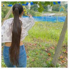 ストレート ヴィーナスコレクション ロング ポニーテール ヘアスタイルや髪型の写真・画像